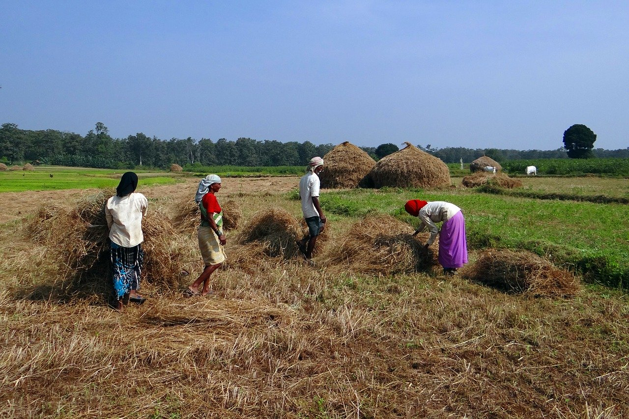 paddy-field-workers-Supporting the migrant workers in this time of crisis